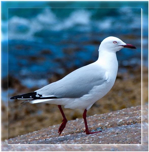 Gull by VonQ