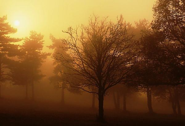 Golden Morning by paulmeyer