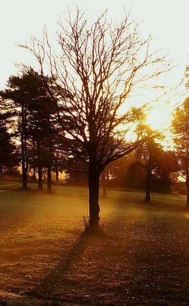 Golden Morning 2 by paulmeyer