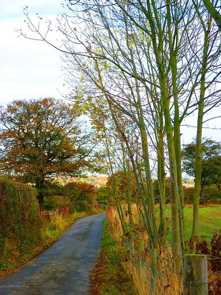 Autumn Lane by ChrisBilton