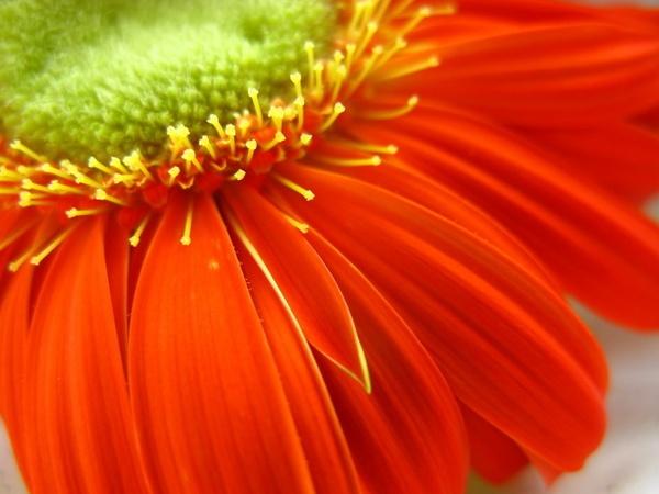 Sunny Fleur by ssawdy