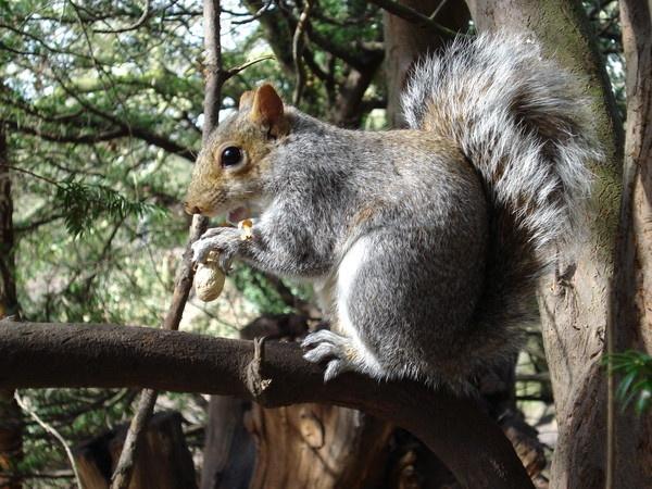 squirrel nutkins by allxdr