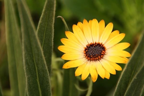 Kew Gardens by David4583