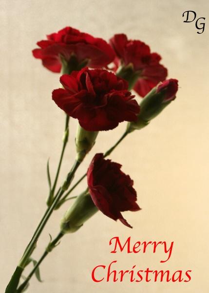 Christmas by David4583