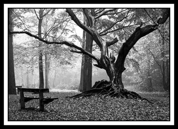 The Tree by tjdup
