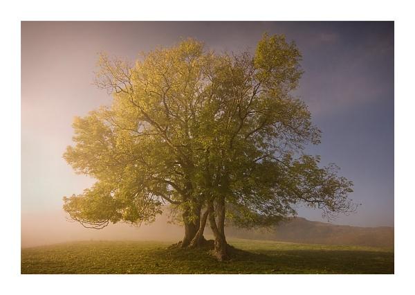 Half mist by Rob_Taylor