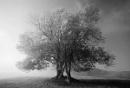 Half Mist