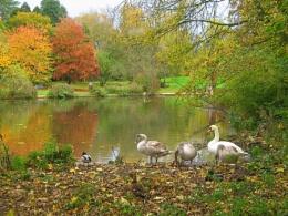 Abbey Park Lake