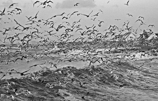 Gulls by jonny250