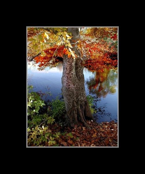 Wishing Tree by jacktheknife