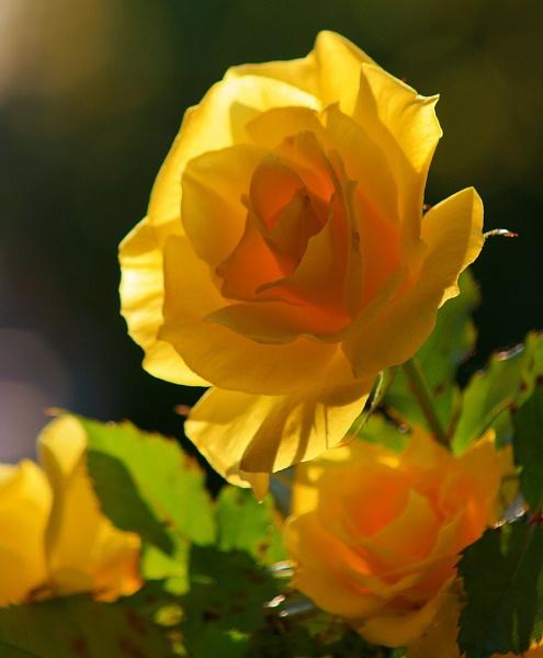 Nov.bloom by dawnmichelle