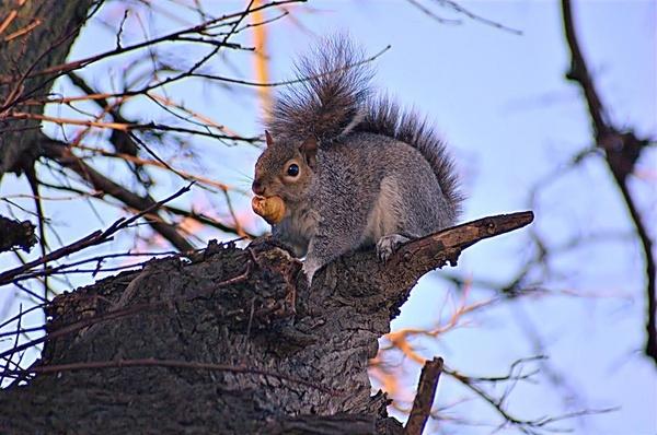 Where Shall I Hide My Nuts by gazb159