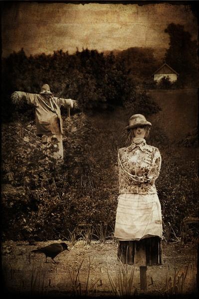 Scarecrow by Branka