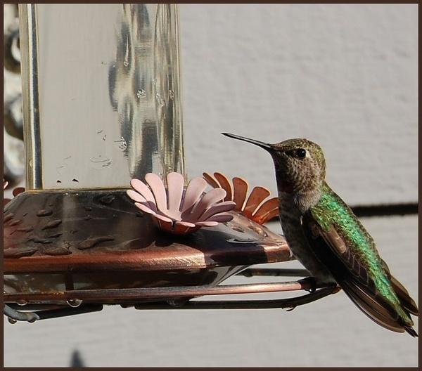 Humming bird by CherryMartin