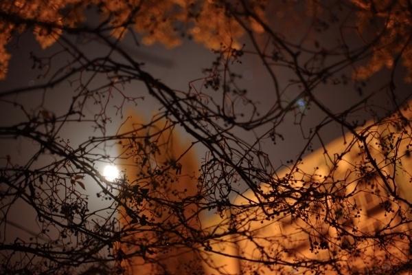 moonlight by bokeh