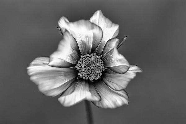Metal Petals by Angi_Wallace