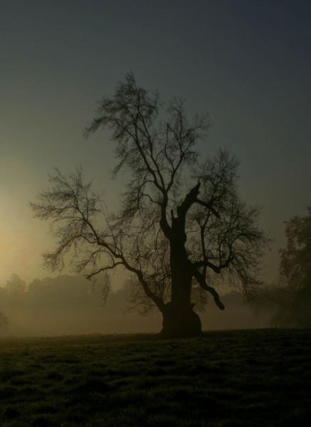 Misty Morning by Tettie