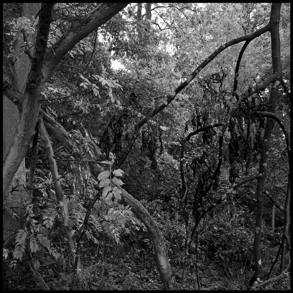Trees by JBA