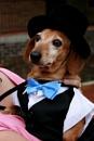 Doggie dress ups by x_posure