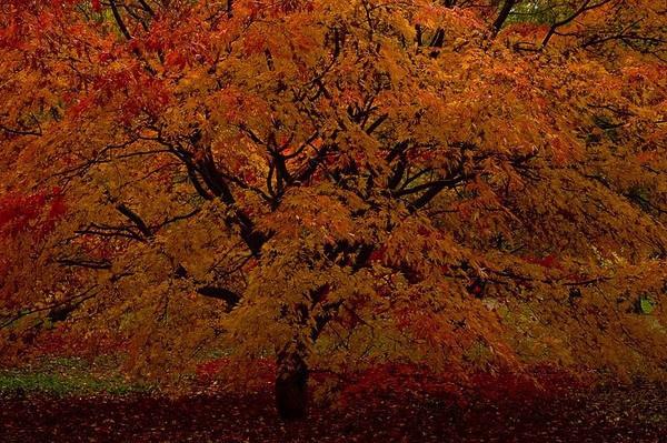Westonbirt Colours by dven