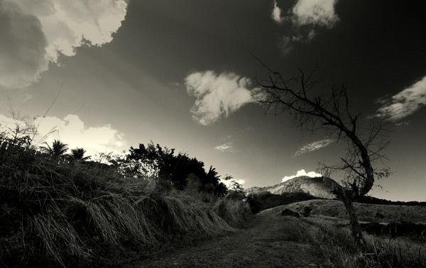 Tree & light rays by musashi