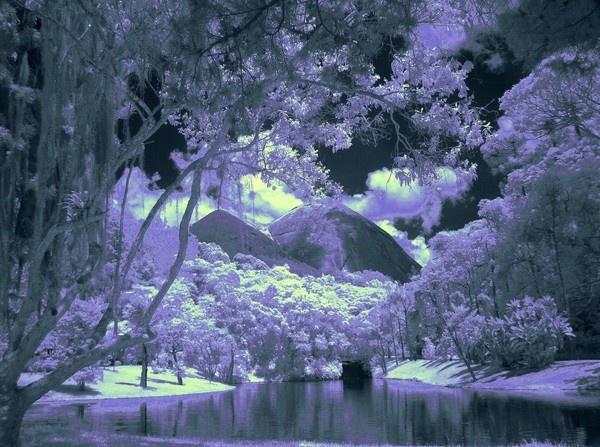 Violet Spring by musashi