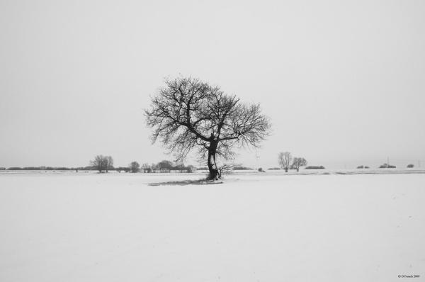 Snow Field Tree by nice_fish