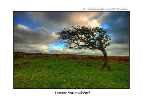 Exmoor by Cristian
