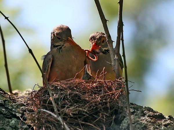 Proud Parents by ShedMan