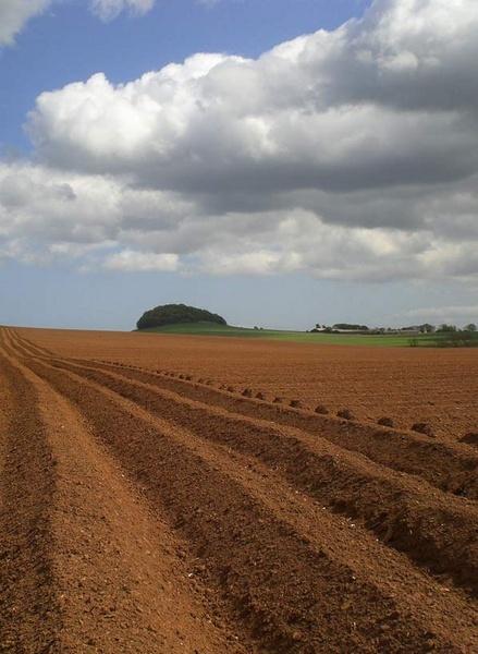 potato rows by simbo76