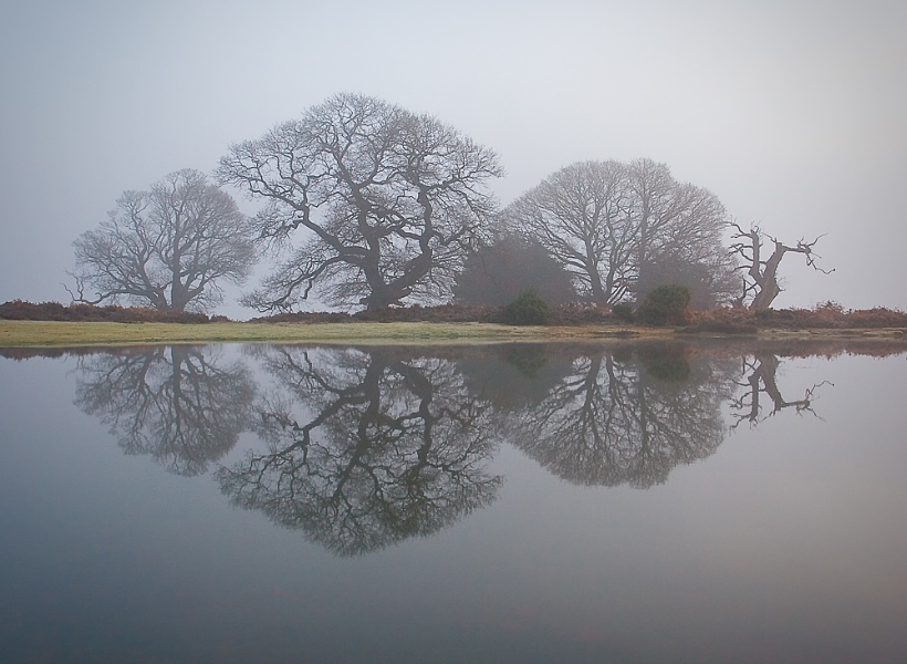 New Forest Pond - Reflections and Mist