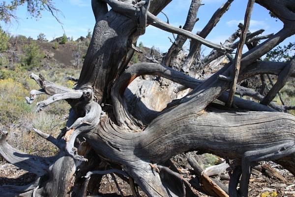 Lava Trees by chuckspics