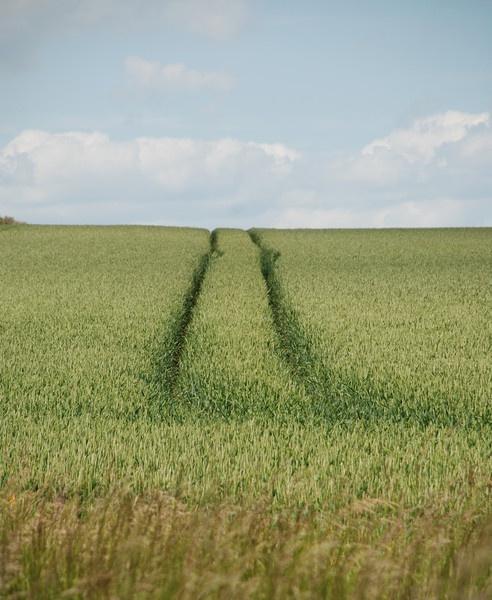 Crop Tracks by dannyboyok