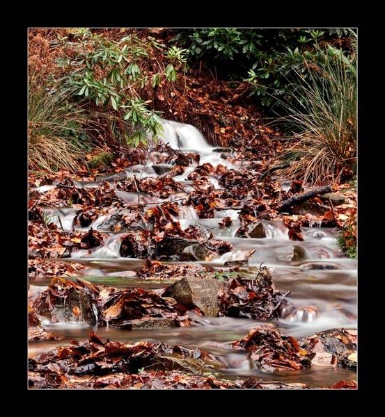 Autumn Stream by jeni