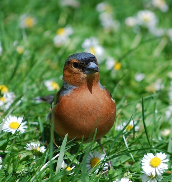 little birdy by Bondgirl