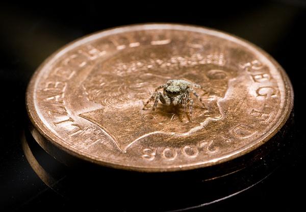 Money Spider by DanielDCP