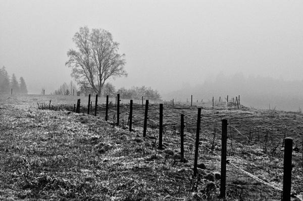 Morning mist by widols