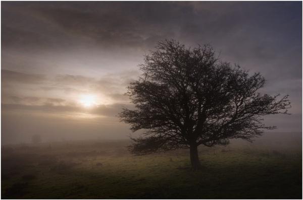 Mystical Tree by iansnowdon