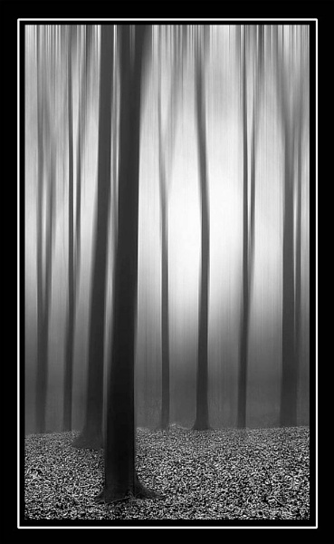 Forest impressions by bryan26
