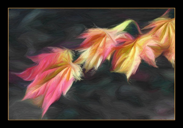 Autumn leaves by bryan26