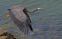 Heron's Takeoff.