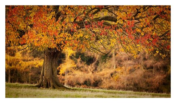 Autumn Oak by ian.daisley