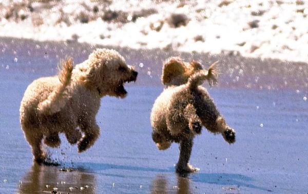I\'ll Race Ya to the Sea! by wupohan