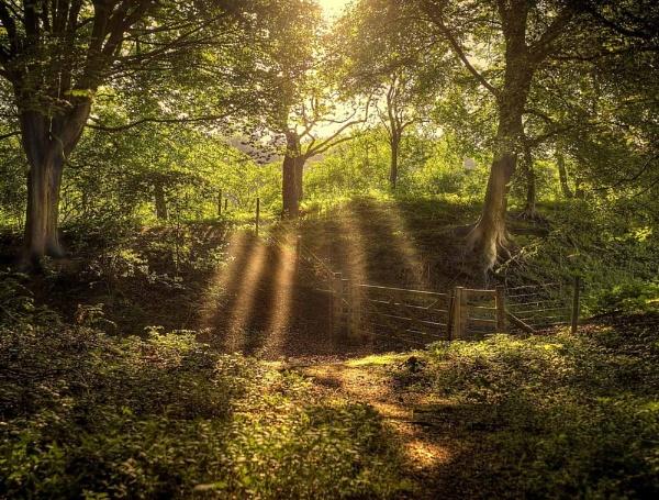 Last Ray\'s Of Summer by Hailwood