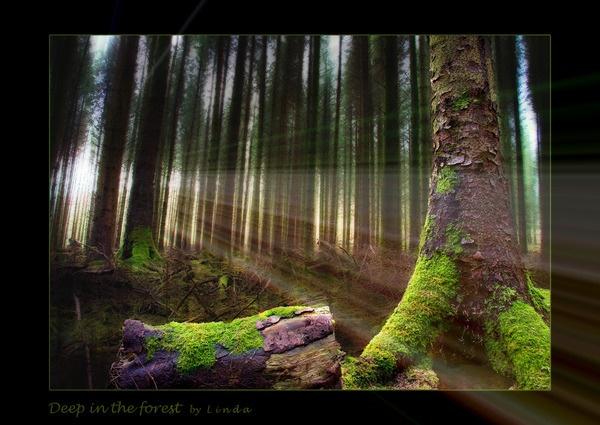 *** deep in the forest by Mynett