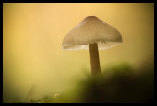 Mystic Mushroom by Valerie1