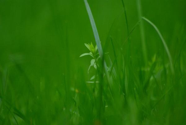 Green by wipka84