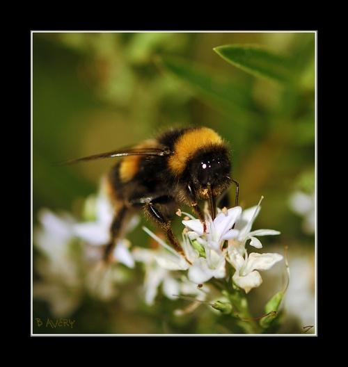 Beeyootiful by Bondgirl