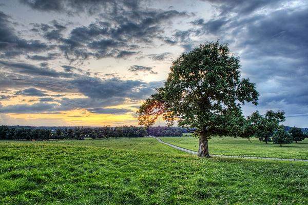 Woburn Tree by darrenackers