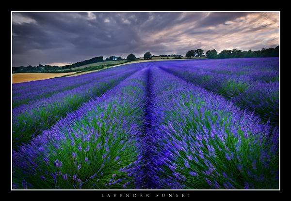 Lavender Sunset by derekhansen
